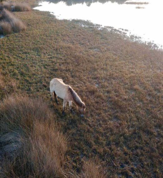 horse eating grass on the shore of a body of water
