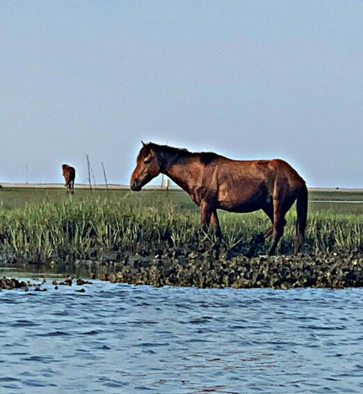 horses eating grass on the shore of a body of water